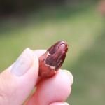 Kakaoböna med halva skalet kvar