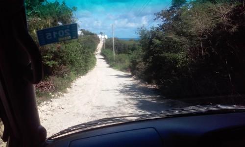 hyrbil_anguilla